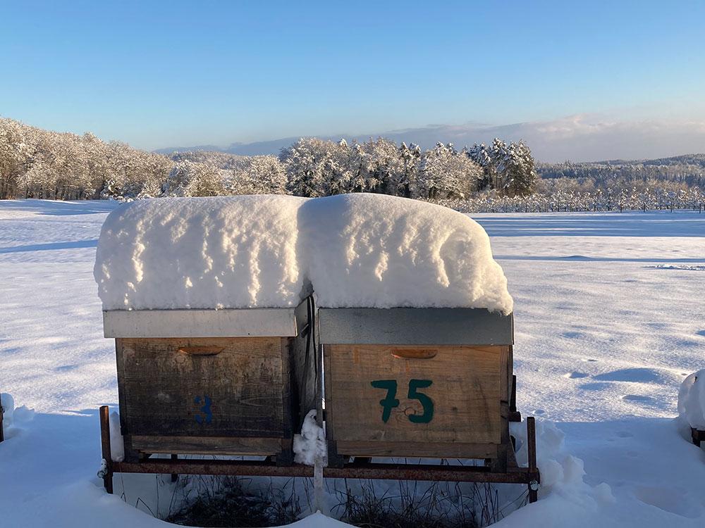 Die Schneedecke gibt zusätzliche Isolation im Winter   bienen-freunde